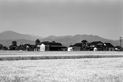 富山県 Toyama Prefecture  Japanese Wheat Field Traditional House A. Henry Rose UTSOA University of Texas Austin School of Architecture Japan Japanese 35mm Film Photography 日本