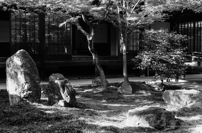 建仁寺   Kinnen-ji, Kyoto Temple Courtyard Garden Maple Trees Sunlight Moss Rocks komorebi 木漏れ日 A. Henry Rose UTSOA University of Texas Austin School of Architecture Japan Japanese 35mm Film Photography 日本